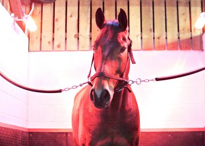 sport-horses